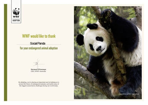 Adopt A Panda Certificate - Social Panda